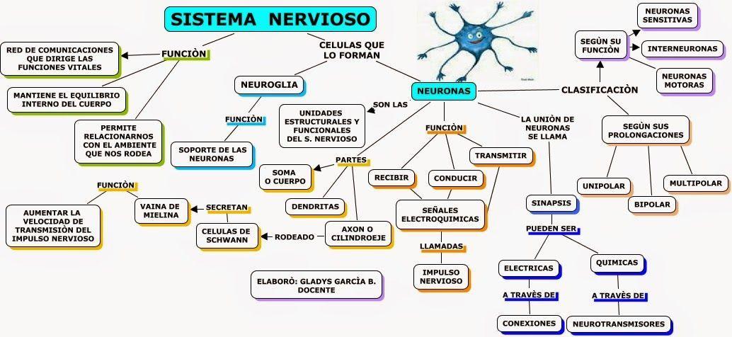 Cuadro sinóptico del sistema nervioso - CuadroSinoptico.com.mx